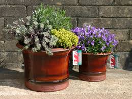 garden plant pots for sale. garden centre pembrokeshire | fishguard gardening pots. smith \u0026 jennings - welsh handmade pottery plant pots for sale i