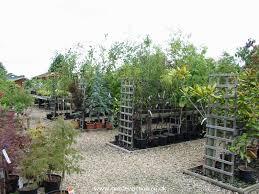 ornamenta trees