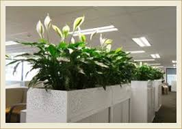 office indoor plants. Indoor Plants Installation Office A