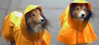 Top 10 Best Dog Raincoats In 2019