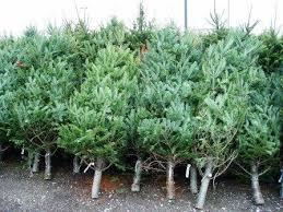 Christmas Tree Sales \u2013 St. John\u0027s United Methodist Church