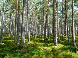 Apa saja yang tergolong hasil hutan kayu dan hasil hutan bukan kayu serta manfaatnya bagi perabot rumah tangga banyak yang terbuat dari rotan. Jenis Hasil Hutan Dan Manfaatnya Bagi Kehidupan Seluruh Makhluk B