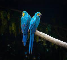 Birds — Catalina Classic Tile