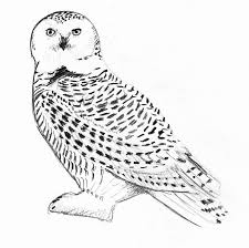 Small Picture Snowy Owl Coloring Page Miakenasnet