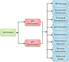 Difference Between Job Analysis And Job Description With