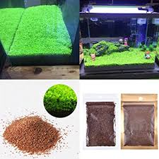 aquarium garden. Exellent Aquarium Aquarium Plants Seeds Aquatic Double Leaf Carpet Water Grass For Fish Tank  Rock Lawn Garden Inside