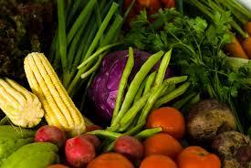 Resultado de imagem para fotos da agricultura familiar