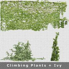 How To Train Climbing Plants And Wall PlantsClimbing Plant