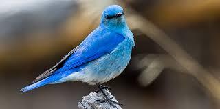 Картинки по запросу bird