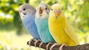 15 Amazing Facts About 15 Birds Mental Floss