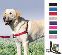 Details About Petsafe Easy Walk Harness 1 8m Lead For