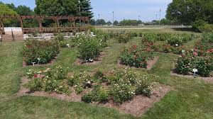 joel anderson is the consulting rosarian for the alton park and recreation department for the rose garden anderson won the outstanding illinois indiana