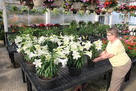 mary ann novak arranges flowers for at gale s garden center in brunswick