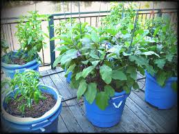 texas a m vegetable gardening containers qlzapqs beat the heat in your veggie garden this summer am