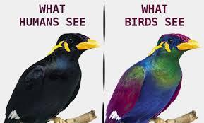 Bird Vision Album On Imgur