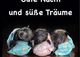 Gute Nacht Sprüche Lustig Bilder Kostenlos Gif Ribhot V2