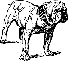 bulldog clipart black and white. Fine White Clip Art Black And White Stock Image Of To Bulldog Clipart Black And White A