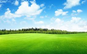 grass field background. Widescreen Green Field Trees And Blue Sky Hd K Resolution On With Nature Wallpaper For Iphone Beautiful Landscape Grass Background O