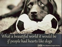 Dog Quotes Love And Loyalty Impressive 48 Dog Quotes About Love And Compassion Quotes Inspiration