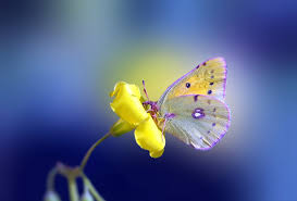 flower yellow erfly background