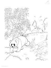 Kleurplaat Kleurplaat Panda 2jpg