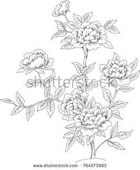 A Small Bush Of Roses Drawn By A Line Vector Image Ez Canvas