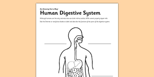 Label The Digestive System Worksheet Science Resource Twinkl