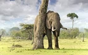 Elephant wallpaper | 2560x1600