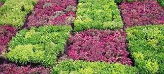 cover crops for gardens. how to use cover cropping make your garden sustainable | doityourself.com crops for gardens n