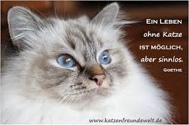 Katzensprüche Die Schönsten Zitate Und Weisheiten Die