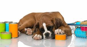 Boxer Puppy Weight Chart Feeding A Boxer Puppy The Best Diet In The Right Way