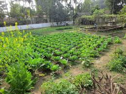 Kitchen Gardens In India The Whimsy Bookworm A Book Blog From India Vignettes Kitchen