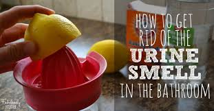 How To Get Urine Smell Out Of Bathroom