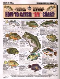 Types Of Bass Fish Chart Fish Chart With Info On How To Catch Them Fish Fish