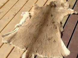 deer skin rug