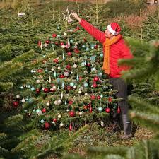 Image credit: B\u0026Q Christmas tree deal! Real Nordman Fir on sale for just 15