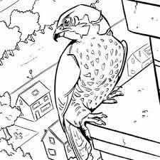 Download Leuke Kleurplaten Van Vogels Vogelbescherming