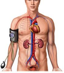 pengobatan darah tinggi secara alami