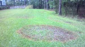 Brown Patch Disease Fighting Brown Patch Disease In Your Yard Columnists