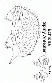 Small Picture Echidna coloring page Animals Town animals color sheet