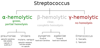 Streptococcus Identification Chart Nice Color Coded Chart To Remember The Strep Classifications