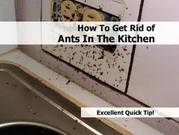 kitchen pretty tiny ants in sink your house decor