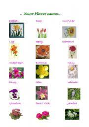 flowers worksheet by tombolino diffe types of flowers dahlia name names of diffe types of