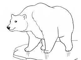 Printable Polar Bear Coloring Pages Coloring