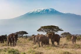 Resultado de imagen de kilimanjaro