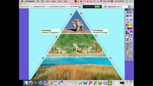 food web pyramid food chains food webs and energy pyramids youtube