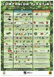 Planting Calendar Companion Planting Chart