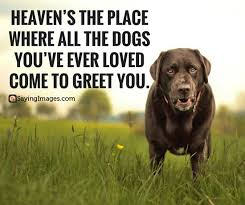 Pet Quotes Unique 48 Dog Quotes For People Who Love Dogs SayingImages