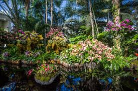 the orchid show in nyc guide