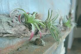 Pflanzen Im Schlafzimmer Schädlich Bilder Innen Schadlich Elmorro